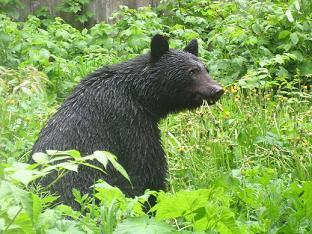 熊ブログ.JPG