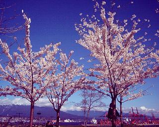 PHOTO015.JPG